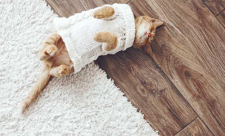 удаление запахов животных